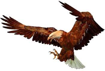 Ornithropter